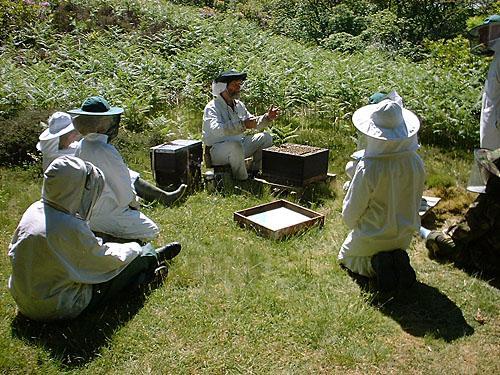 BeesCourses